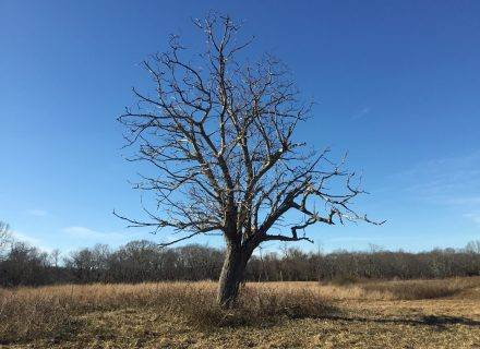 Tree News: How Trees Survive Winter