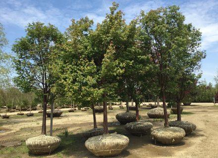 Tree News: How to Plant a Tree